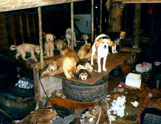 70代男性が多頭飼育し、共に生活していた犬。室内はごみや排せつ物が散乱していた=2016年2月、本島中部(提供)