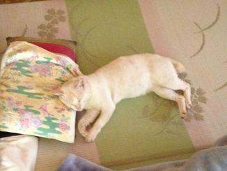 「やっぱり枕最高にゃー」去年のウークイの時