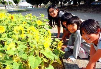満開のヒマワリを前に笑顔を浮かべる子どもたち=那覇市識名・大石公園