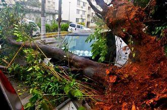 台風の影響で地盤が緩み車両の上に倒れる大木=11日午後3時35分、宜野湾市大謝名(伊藤桃子撮影)