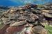 写真1 生きているサンゴ。2013年12月7日、渡嘉敷島の南にある灯台下で撮影