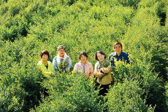 白髪染め剤の原料となるヘナを栽培している「しらかわファーム」代表の神谷美枝子さん(中央)ら県内の生産農家=八重瀬町上田原(カタログハウス提供)