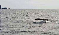 今季初クジラ! ホエールウオッチングのシーズン到来