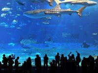美ら海水族館に378万人 2017年度は首里城公園と海洋博の入園者が過去最高