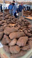 多くの出品で盛り上がった山芋スーブチャンピオン大会=読谷村喜名のゆんた市場
