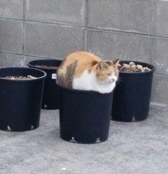 「猫鉢」寒い日に……(土が暖かいのかな?笑)
