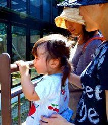 5カ月ぶりに展示が再開されたツキノワグマの美月を見つめる親子=7日、沖縄市・沖縄こどもの国