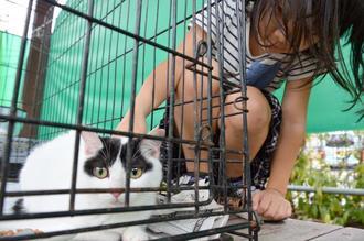 4月に開かれた「つなぐフェス」で里親探しのブースの猫をなでる子ども=那覇市中心商店街にぎわい広場