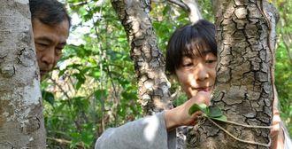職員のアドバイスを受けながら麻ひもでナゴランの苗を木に結わえ付ける参加者=名護市名護