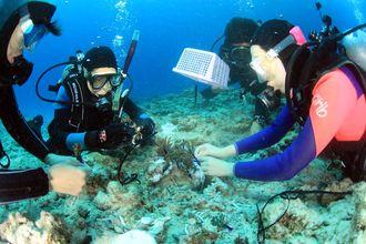 写真Bダイビングポイント 海人(うみんちゅう) 第1回サンゴイキイキプロジェクトサンゴの日(3月5日)に行いました。今年もサンゴの日には第2回が行われます(主催 渡嘉敷島ダイビング協会)。2013年3月5日撮影。