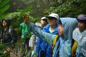与那覇岳の登山道を歩き、やんばるの生物について学ぶ子どもたち=1日、国頭村