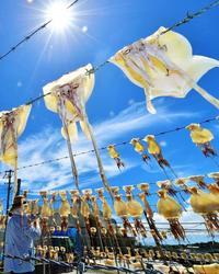 夏本番! 沖縄の青空にイカもジリジリ きょう小暑
