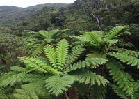 世界自然遺産登録でどう変わる? 森と生きる、やんばる3村の思い