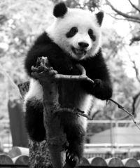 [きょうナニある?]/話題/パンダ効果 400万人突破/上野動物園 6年ぶり