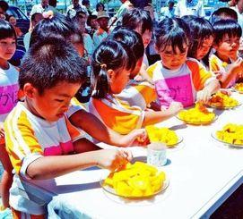 取れたてのマンゴーを試食する子どもたち=13日、豊見城市豊崎