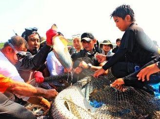 例年以上に大きな魚の捕れた久高島伝統の追い込み漁体験=4日、南城市久高のピザ浜