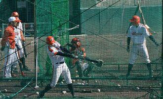 バッティングで汗を流すハンファイーグルスの選手ら=2013年1月21日、八重瀬町東風平運動公園野球場