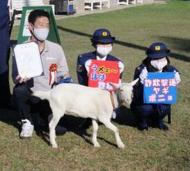 電話詐欺の撲滅を呼び掛ける千葉県警の大使に任命された子ヤギの「ポニョ」=26日午後、千葉県佐倉市