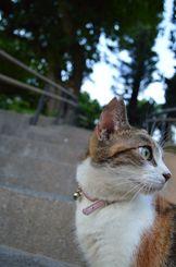 「まなざし」2年前の8月、桜坂の街中で
