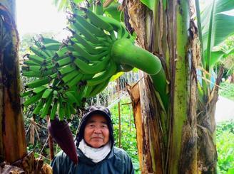 幹の途中から飛び出してきたバナナの実と、宜野座さん=金武町屋嘉