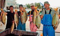 タマン大漁 沸く読谷/漁協直売店で格安販売