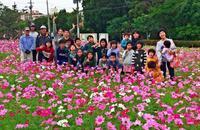コスモス満開 沖縄・西原町 6年前から種まき手入れ「頑張った」笑顔咲く