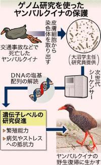 ヤンバルクイナのゲノム解読に成功 希少種繁殖に期待