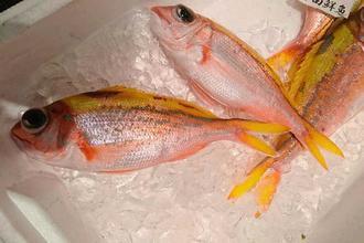 【ビタロー】高級魚で水深が深い場所で釣れることからしまくとぅばで「フカヤービタロー」とも呼ばれる(マルカ水産提供)