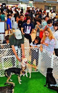 犬猫殺処分ゼロへ決意 ペットカーニバル沖縄2016