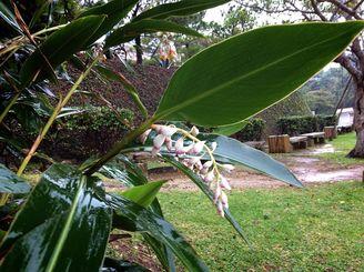 奄美地方に続き梅雨入りした沖縄地方
