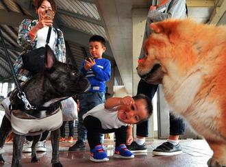 会場にはペット同伴の来場者が多数訪れ、子どもたちは動物と触れ合い笑顔を見せた=8日、宜野湾市・沖縄コンベンションセンター展示棟(古謝克公撮影)