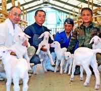 夢のパートナーはヤギ120頭 精肉にチーズ、ジェラートなど商品開発 沖縄最大級の施設オープン