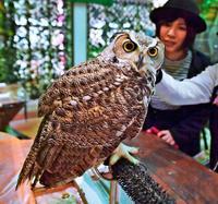 フクロウに癒されて 那覇・牧志公設市場の近くに新スポット、観光客にも好評