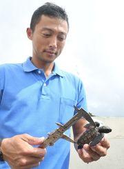 国営沖縄記念公園の施設内で生まれたウミガメの赤ちゃんの大きさを測る職員=8月28日、本部町の同公園