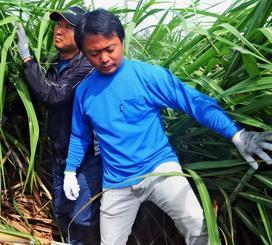 台風21号で折損したサトウキビの被害調査を行う南大東村職員ら=22日午後1時ごろ、村内