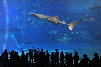 Visitors are seen at Okinawa Churaumi Aquarium, a popular tourist spot.