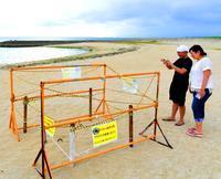 AKB配慮…ウミガメの卵見守ります 沖縄での選抜総選挙、運営側が対応策発表