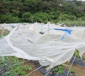 突風でなぎ倒されたインゲン畑のネットと骨組み。後方右の山に飛ばされた白いネットが確認できる=南城市玉城