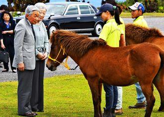 与那国島の東牧場を訪れ、与那国馬を見つめる天皇、皇后両陛下=2018年3月28日(代表撮影)