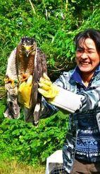 放鳥前、飼養ボランティアに抱えられる「ふぁなん」と名付けられたカンムリワシ=石垣市、星野地区