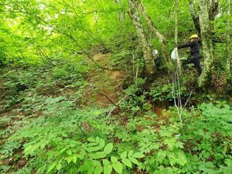 白神山地のブナ林で地滑り発生歴を調査する弘前大の研究者ら=2019年7月、青森県西目屋村(弘前大提供)