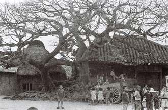 アコウとみられる巨木と民家。右隅には子どもたちが集まっている。当時の取材メモから、沖縄本島中部の集落と推測される(朝日新聞社提供)