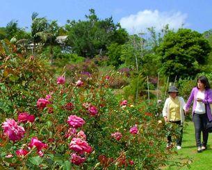 園内に咲いたバラと花見を楽しむ来園者=13日、東村慶佐次