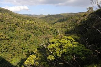 沖縄本島北部、やんばるの森