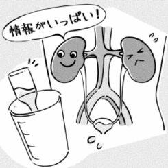 おしっこと腎臓の話