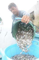スク漁が始まった南城市の奥武島。あるウミンチュは「漁の出だしとしては、いい感じ」と笑顔だった=13日、奥武漁港
