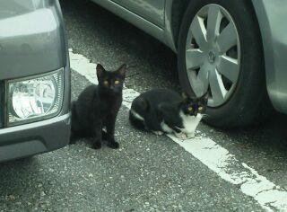 「おはよーございますニャン♪」職場の駐車場で、誰かに見られているような気配を感じ、あたりをキョロキョロしたところ。。見られてましたーー(゜ロ゜)。