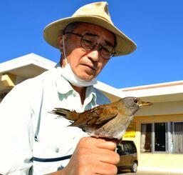 脳振とうを起こしたシロハラの回復を見て放鳥した岸本林さん=11月27日、名護市内