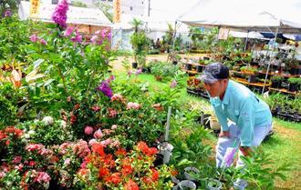 お気に入りの花はないかと探す来場者=14日、沖縄市農民研修センター