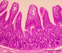 世界的な豚の感染症 安定量産できるワクチン 琉球大学発ベンチャー、日米で特許